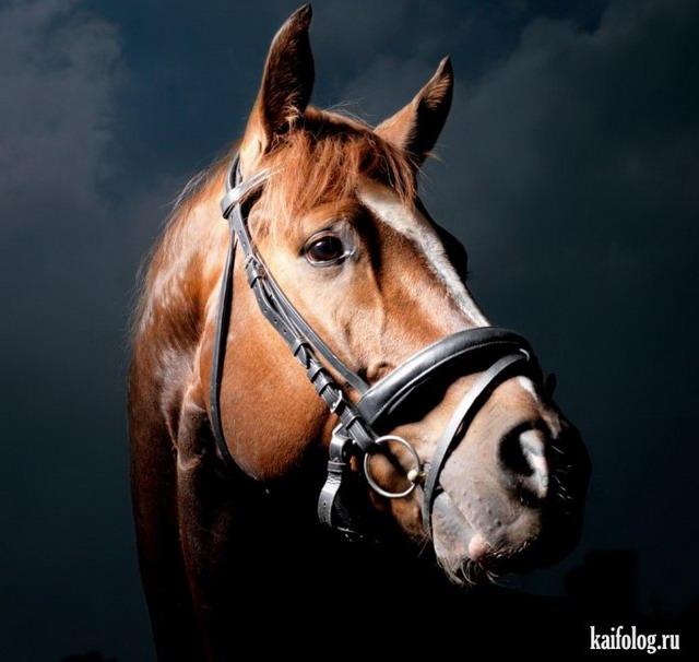 Красивые фото животных (50 фото)