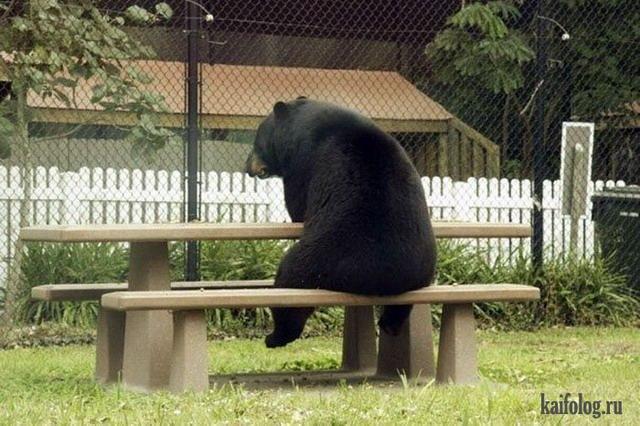 Русские медведи 60 фото