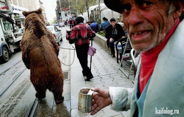 Русские медведи (60 фото)