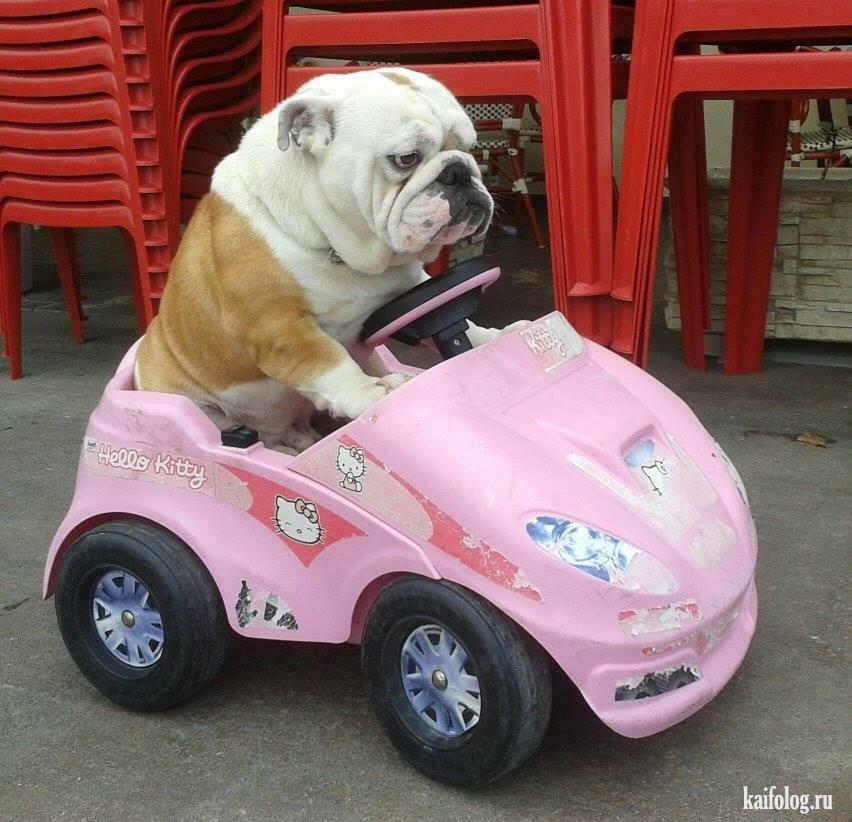 waarom je nu je huisdier een roze barbie-auto cadeau moet geven
