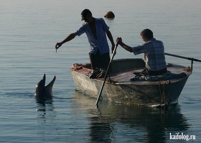 Рыбака дельфин