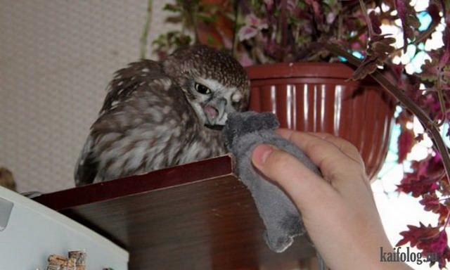 Чем кормят сову в домашних условиях
