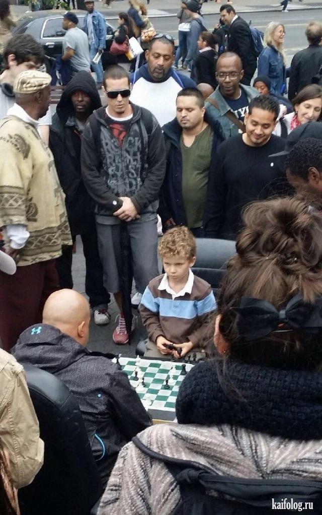 Шахматные приколы (50 фото)