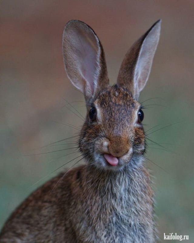 прикольные фото про зайца живот покатая спина
