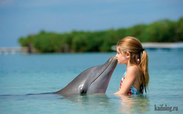 Дельфины (45 фото)