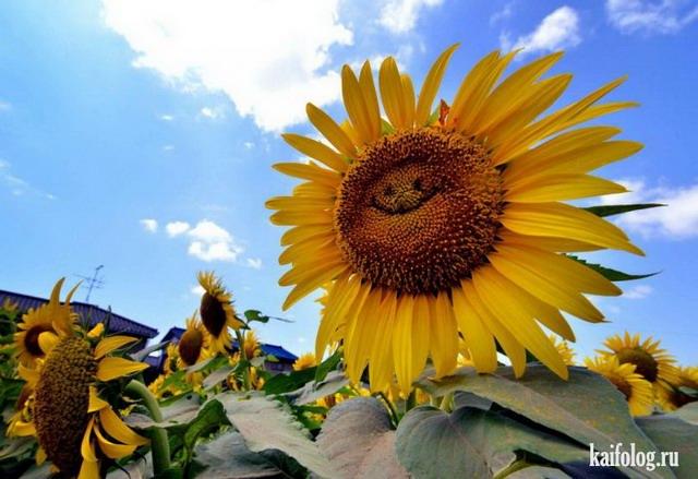 Фото приколы недели (11 - 17 августа 2014)