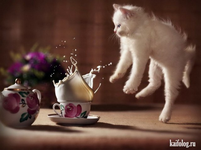 Котики (50 фото)
