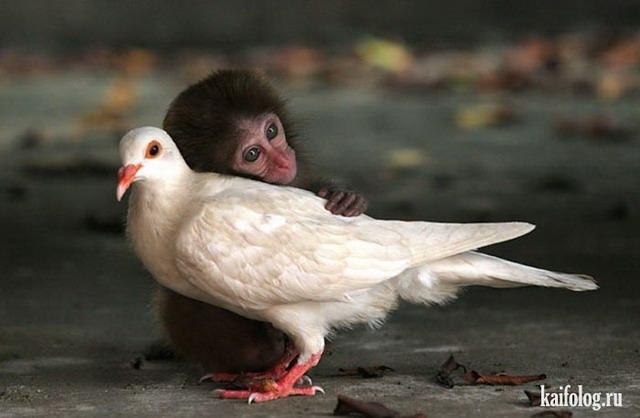 Животные как люди (50 фото)