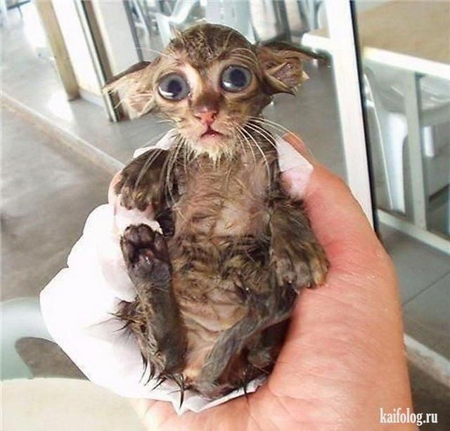 Мокрые коты (50 фото)
