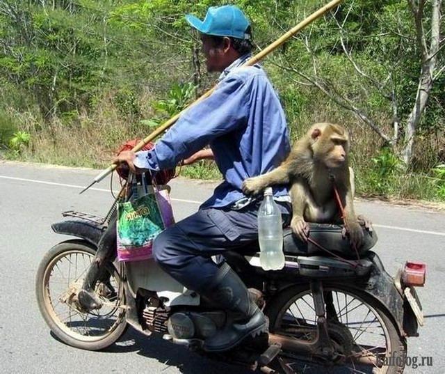 Секс у людей с обезьянами 24 фотография