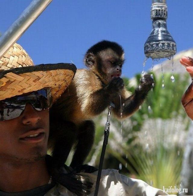 Секс человека и обезьяны онлайн 17 фотография