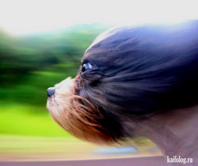 Собачьи стоп-кадры (50 фото)