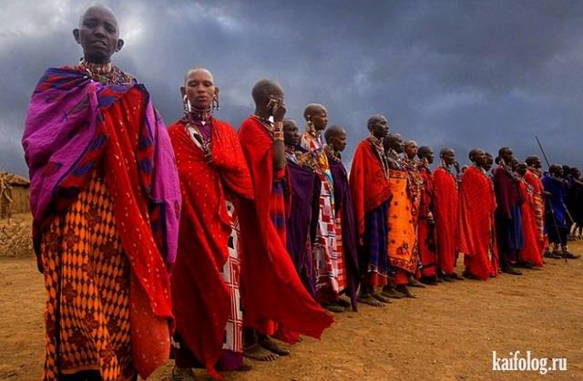 Африка (50 фото и видео)