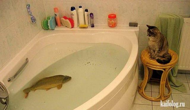 Прикольная рыба (55 фото)