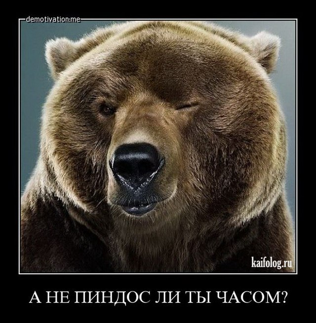 Демотиваторы по русски 212 50 смешных