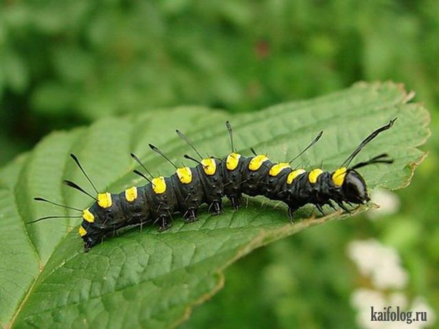 Прикольные гусеницы (50 фото)