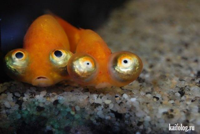 рыбки прикольные картинки: