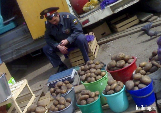Приколы про сельское хозяйство (55 фото)