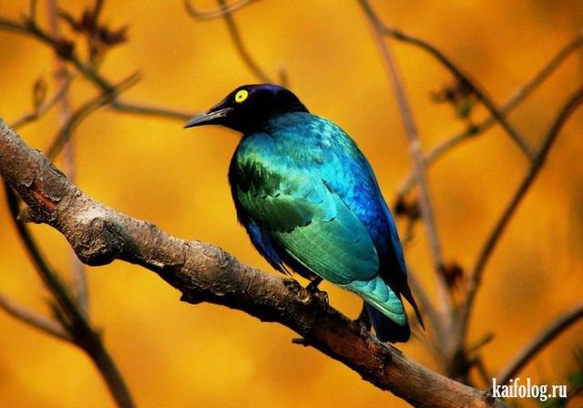Прикольные птицы (55 фото)