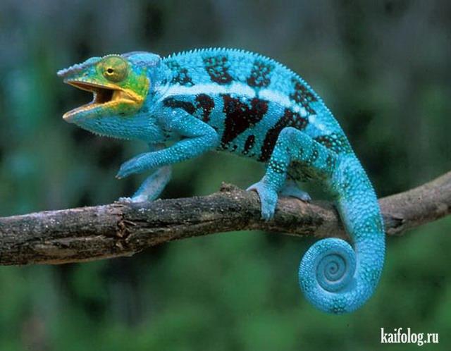 Животные необычной окраски (50 фото)