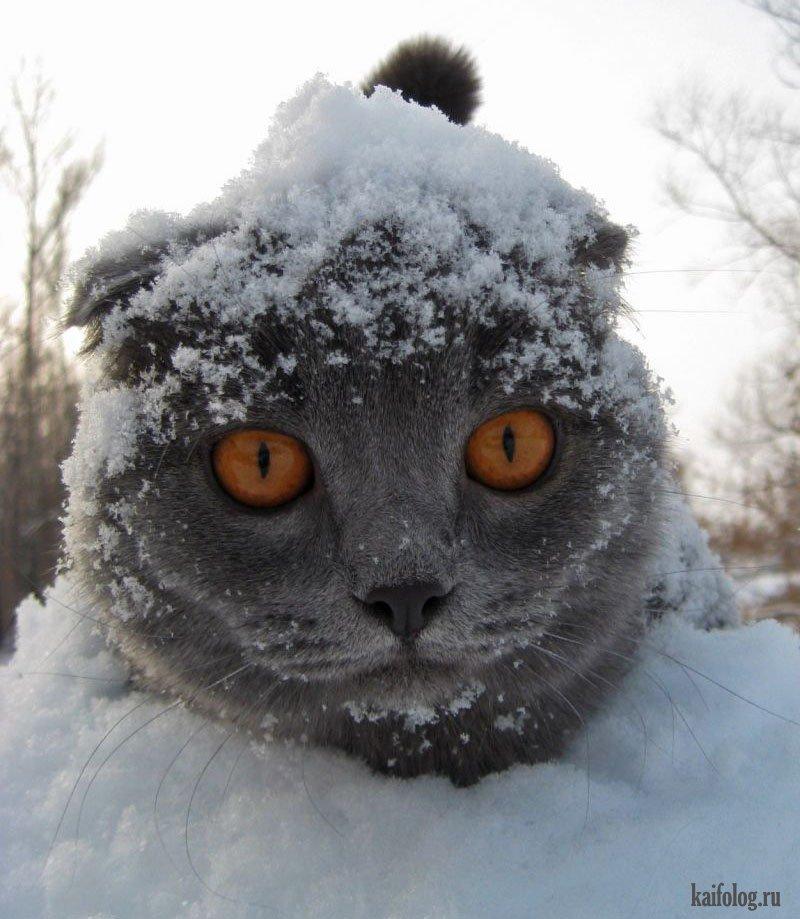 фото приколы на снегу русского стиля