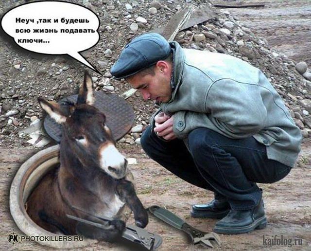 Прикольные картинки таджикский