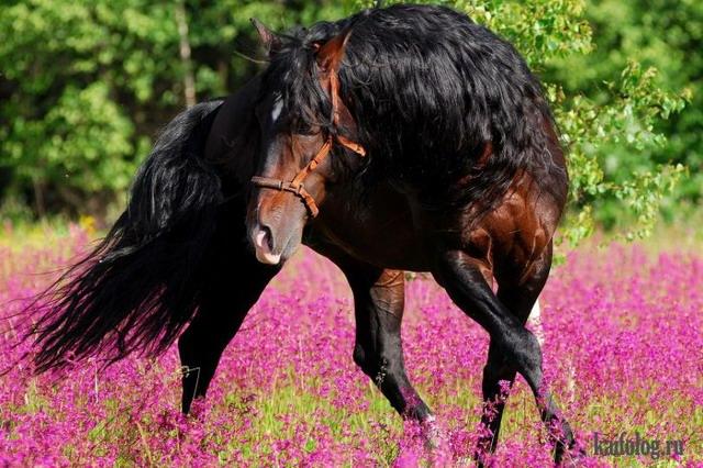 Настоящая красота (55 фото)