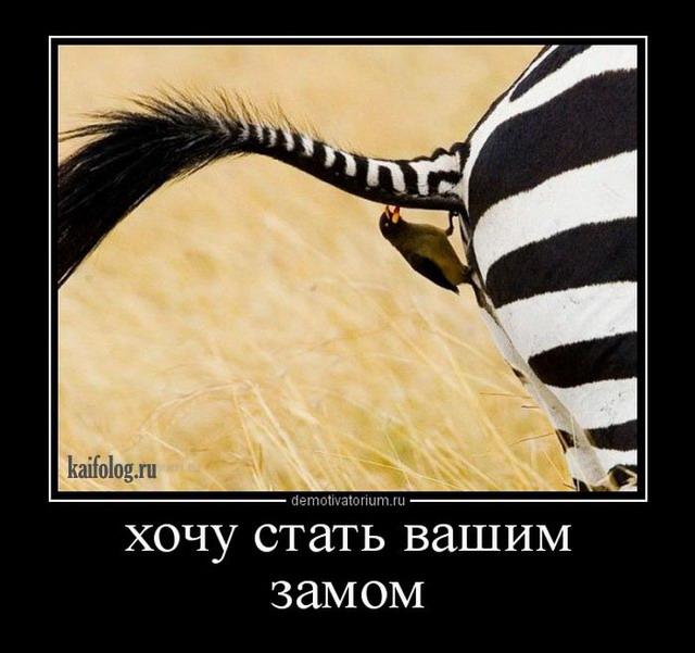 """Еще один акционер """"Амстора"""" призвал стабилизировать работу торговой сети - Цензор.НЕТ 3539"""