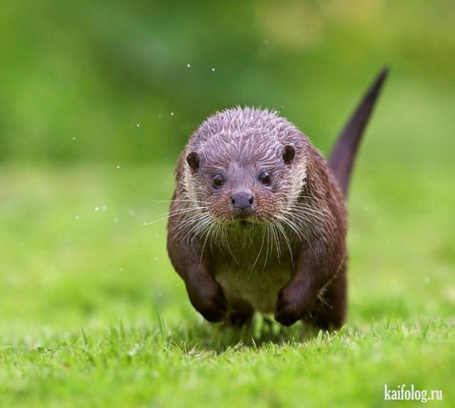 Прикольная животина (55 фото)