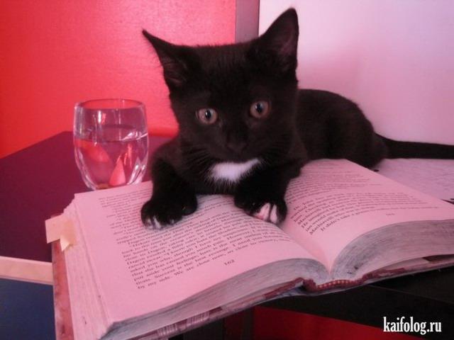 Фото котов (55 фото)
