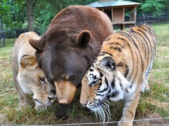 Животные 2014 года (75 фото)