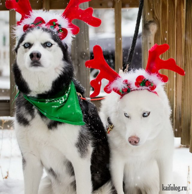 Новогодние фото (80 фото)