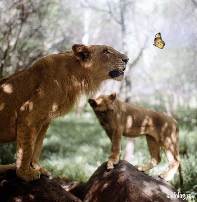 Восхитительные фотографии (60 фото)