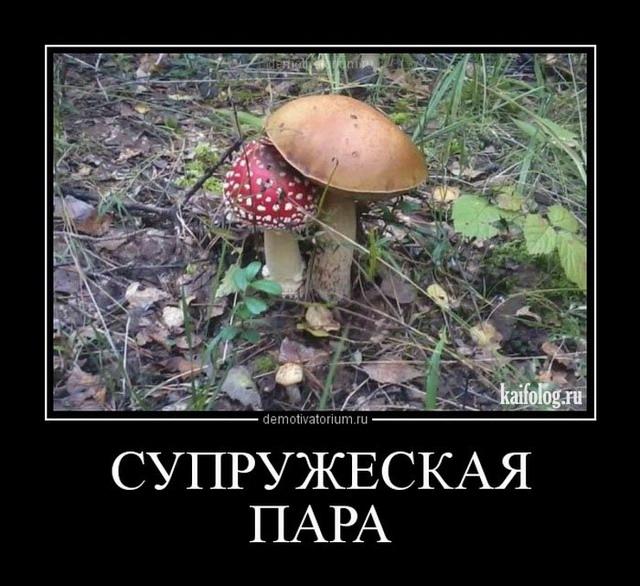 Демотиваторы под грибами