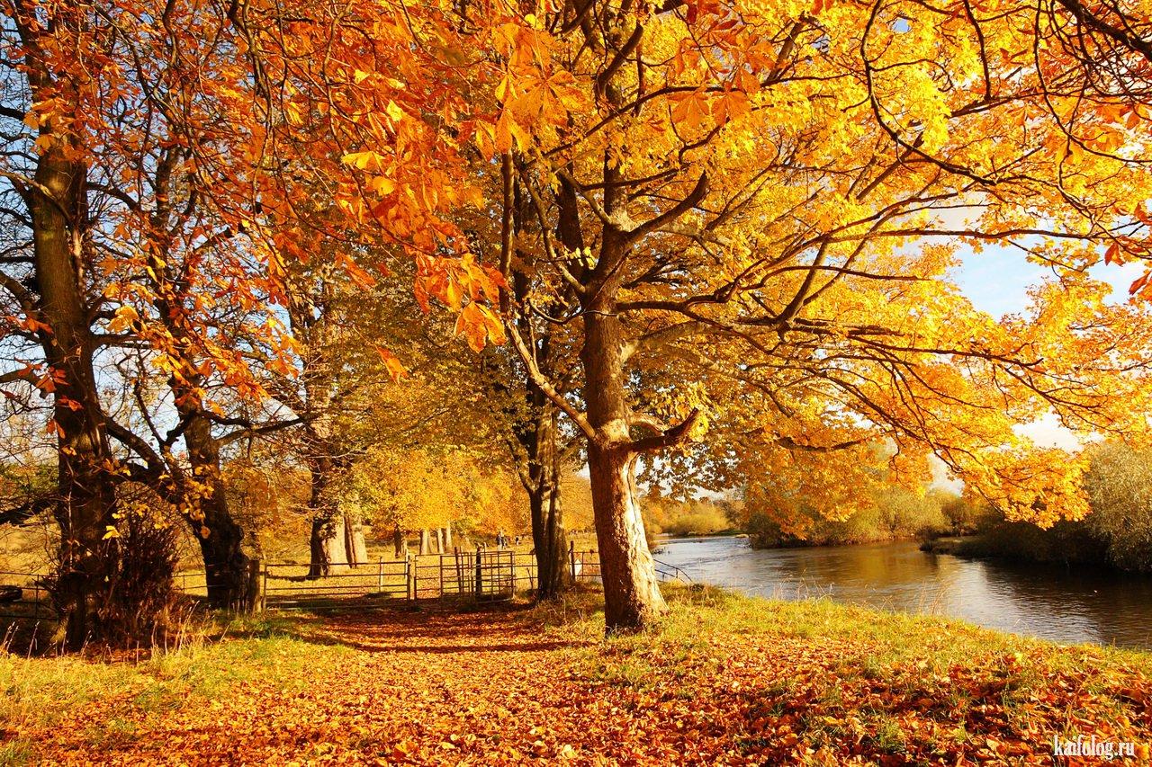 одним все картинки золотая осень крутые изображений вашему