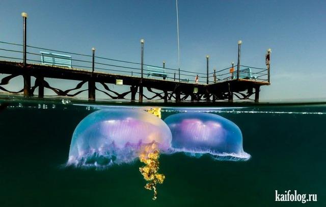 Наполовину под водой (45 фото)