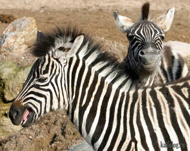 Фото животных (55 фото)