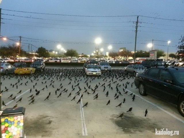 Странные приколы (65 фото)