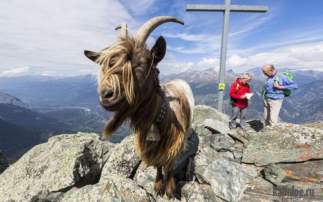 Классные фото животных (50 фото)