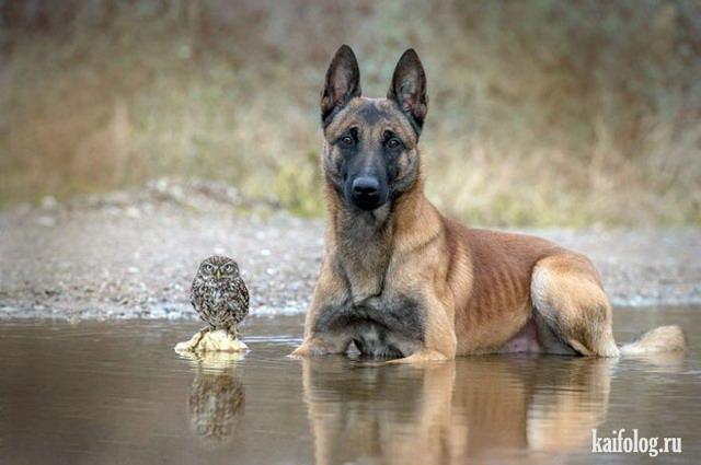 Дружба животных (55 фото)