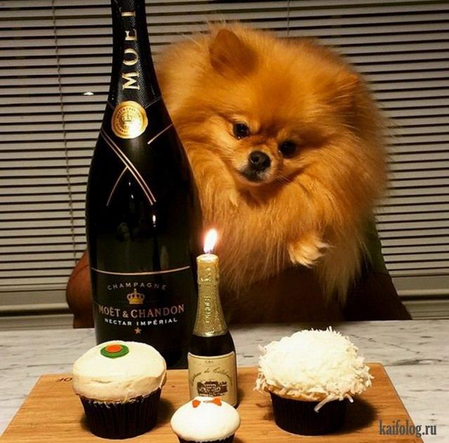 Самые богатые собаки (40 фотографий)