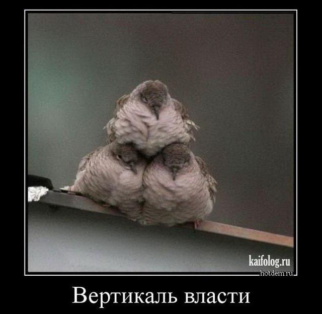 Весёлые демотиваторы - 262 (45 демотиваторов)
