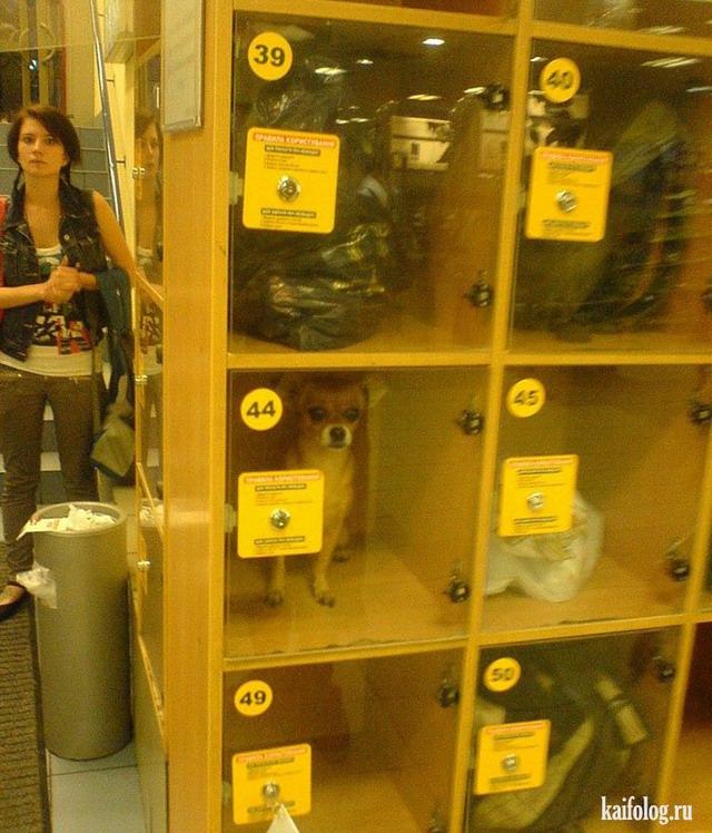 Приколы про камеру хранения (30 фото)