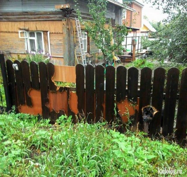 Чисто русские животные (55 фото)