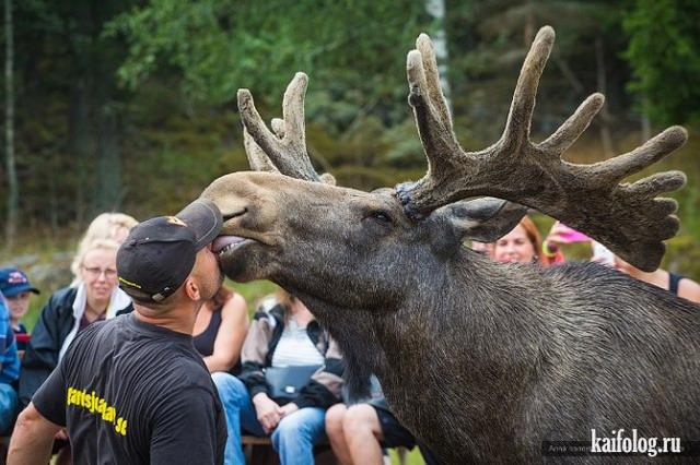 Смешные фото животных (50 фото)