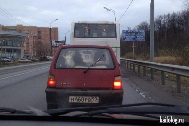 Мега дача (45 фото)