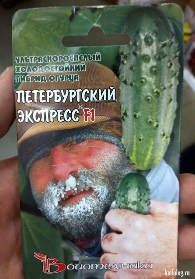Пора покупать семена (35 фото)