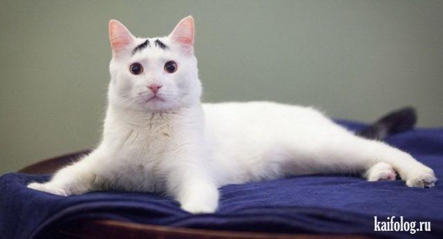 Про кошек (50 фото)