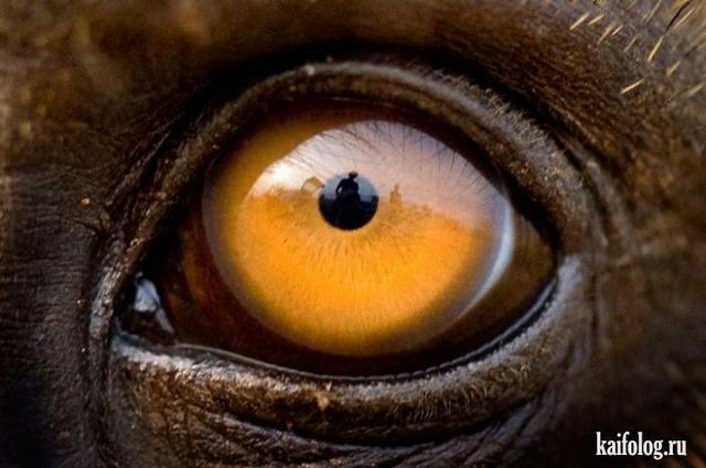 Глаза (30 фото)