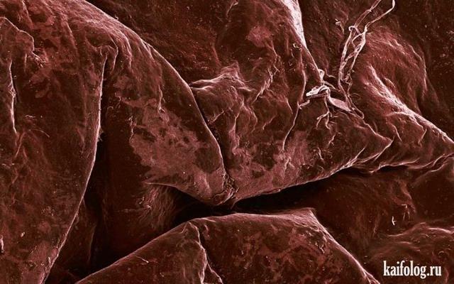 Еда под микроскопом (23 фото)